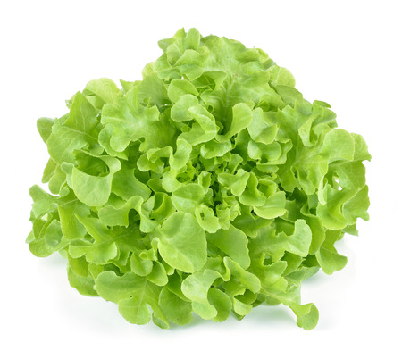 Oak leaf lettuce isolated on white. 版權商用圖片