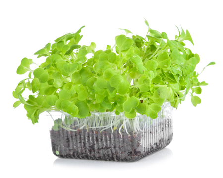 Mustard Green Fresh Vegetables isolated on a white background