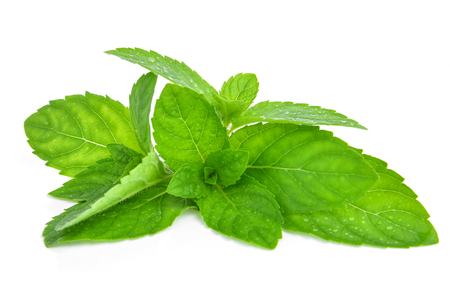Fresh mint leafs isolated on a white background 스톡 콘텐츠