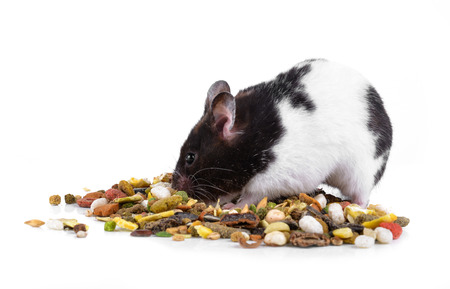 hamster eating some food on a white background Stock Photo - 115595811