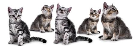 Pet kitten  on the white background Stock Photo