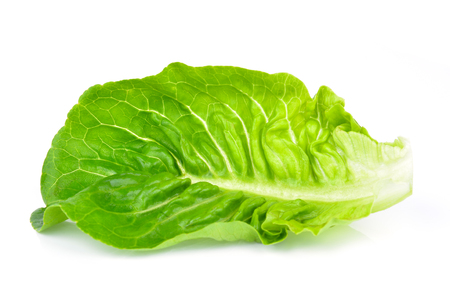 Baby Cos lettuce isolated on white