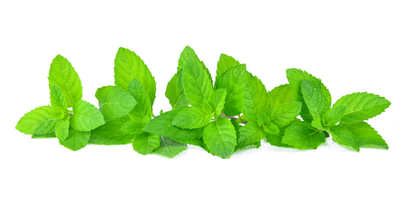 Fresh mint leafs isolated on a white background Imagens