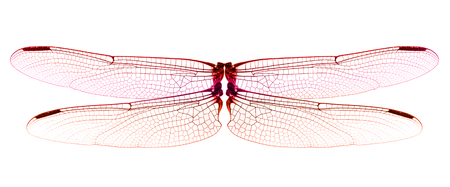 Red Dragonfly wings isolated on white background. Imagens