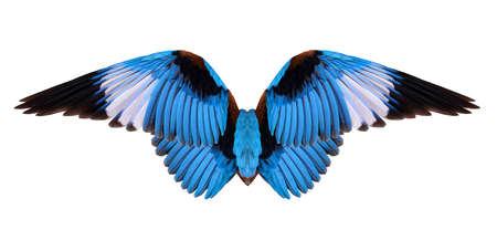 winged bird isolated on white background