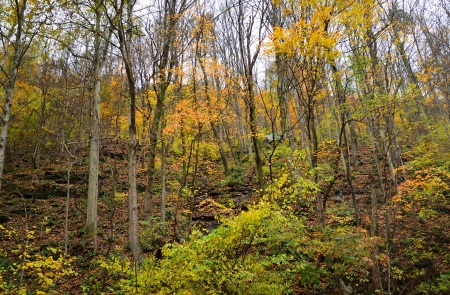 west virginia trees: Autumn in mountain forest