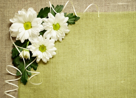 white daisy: Daisies composition on canvas background Stock Photo