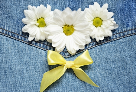 White daisies on blue denim background photo