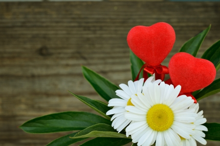 Daisies and two hearts photo