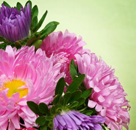 Green background with asters in a corner photo