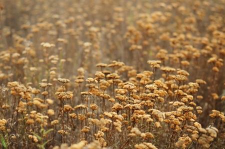 sagebrush: Field of dry sagebrush in autumn colors Stock Photo