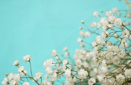 White flowers in a corner of  blue background