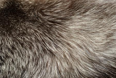silver fox: Textura de la piel de zorro de plata para el fondo Foto de archivo