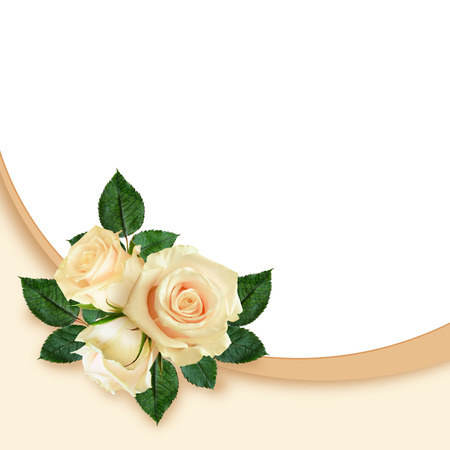 Rose flowers composition on white and peach background