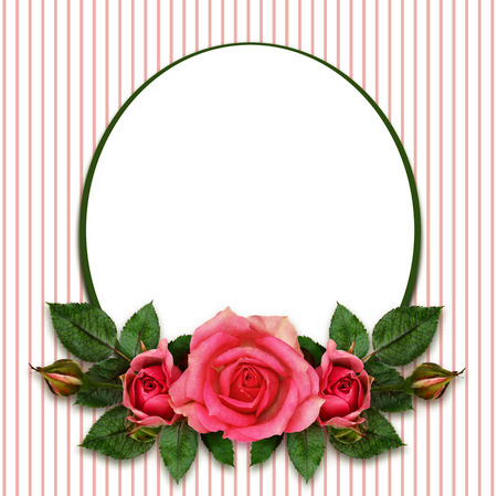 Rose flowers composition and oval frame on white background