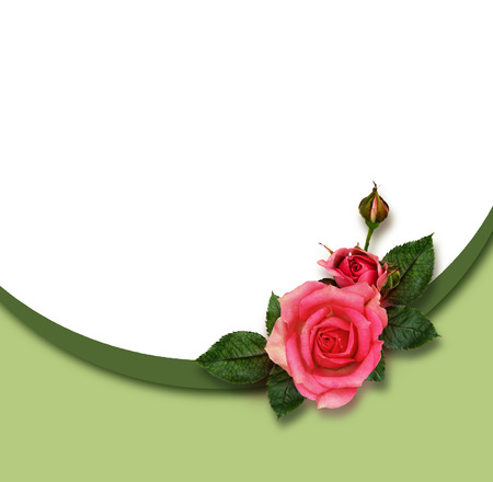 rotund: Rose flowers composition and frame on greenk background Stock Photo
