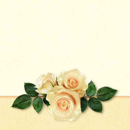 Rose flowers arrangement on peach  Stock fotó