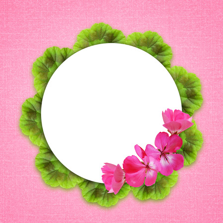 Pink background with geranium flowers and round frame photo