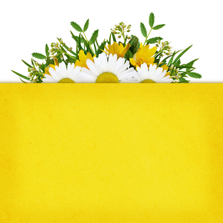 rotund: Wild flowers arrangement on white and yellow summer background Stock Photo