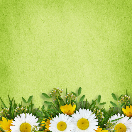 chamomile flower: Wild flowers arrangement and frame on green background