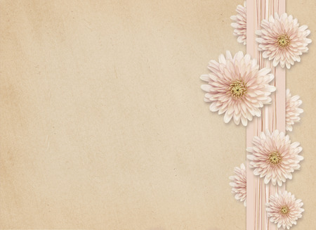 rotund: Aster flowers edge on pink paper background Stock Photo