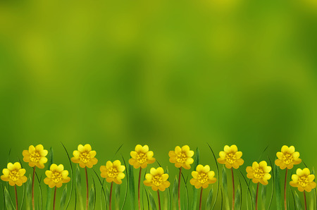 Spring field of wild flowers for background