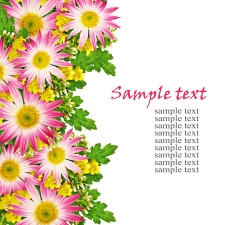 rotund: Asters and wild flowers arrangement isolated on white