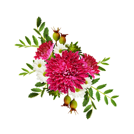 aster flowers: Aster flowers autumn composition isolated on white