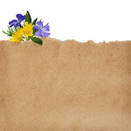 torn edge: Brown craft paper and wild flowers on white background