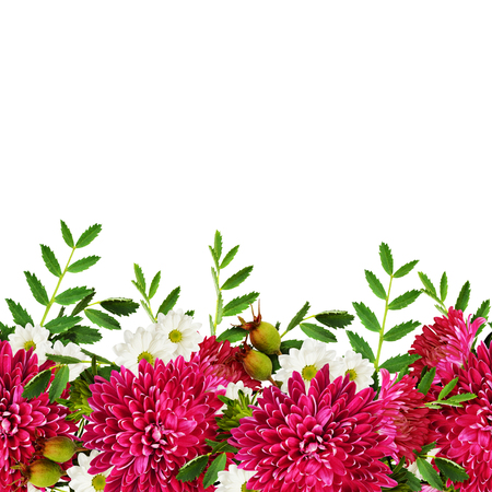 rotund: Aster flowers autumn seamless composition isolated on white Stock Photo