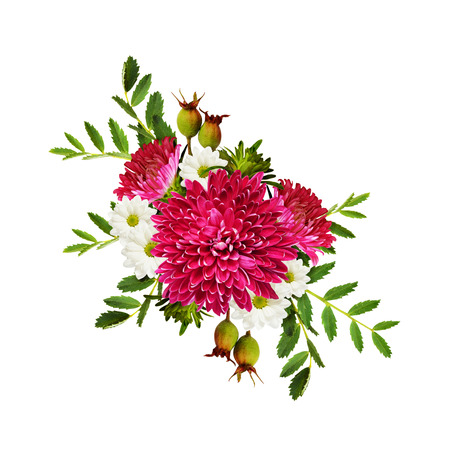 rotund: Aster flowers autumn composition isolated on white