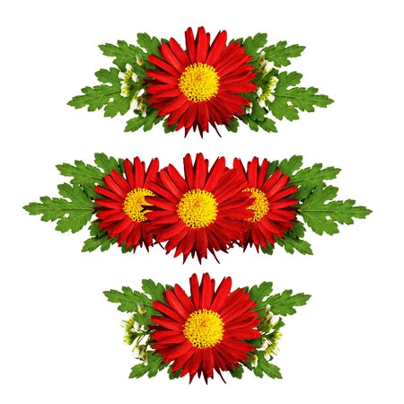 compositions: Red aster flowers compositions isolated on white