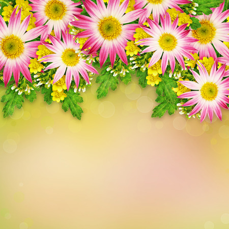 rotund: Asters and wild flowers arrangement for background Stock Photo
