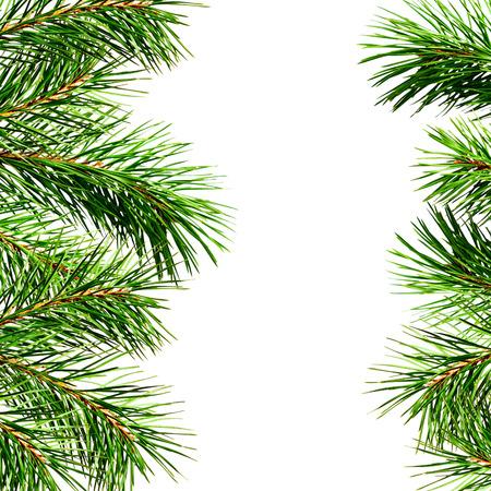 edges: Pine twigs edges isolated on white background