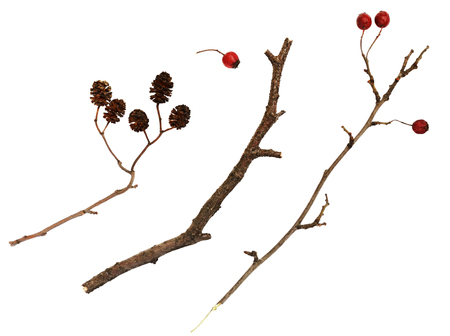 shrunken: Set of dry twigs  with berries and cones isolated on white