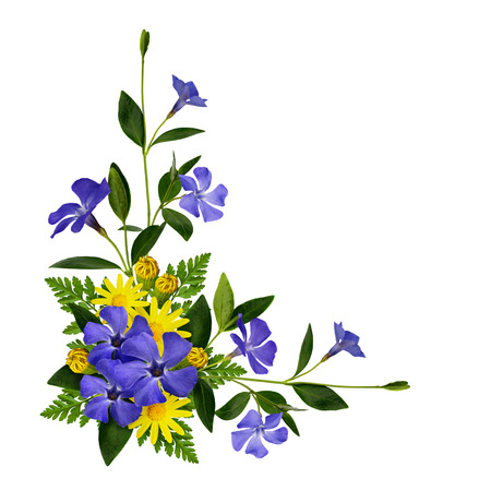 blue flowers: Periwinkle and daisy flowers decoration isolated on white