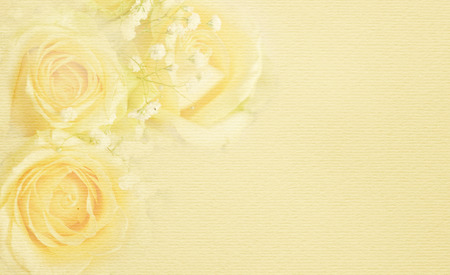White rose flowers in a corner on a beige background