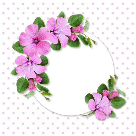 convolvulus: Holiday card with bindweed flowers on spotted background Stock Photo