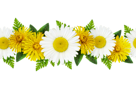 Daisy and dandelion flowers line isolated on white. Seamless pattern.