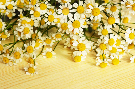 daisy: Small daisy flowers on top of wooden background