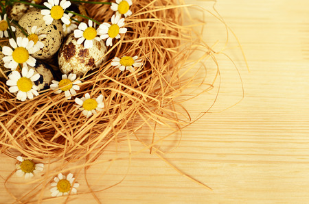 quail nest: Quail eggs in a nest of straw on wooden background Stock Photo