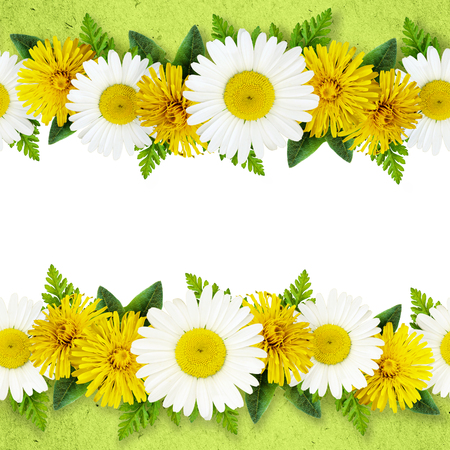 Daisy and dandelion flowers lines on green and white background