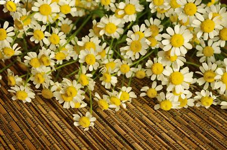 p�querette: Petites fleurs de marguerite sur fond brun fonc� ray� Banque d'images