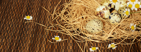japanese quail: Quail eggs and daisy flowers in a nest of straw on dark striped  background Stock Photo