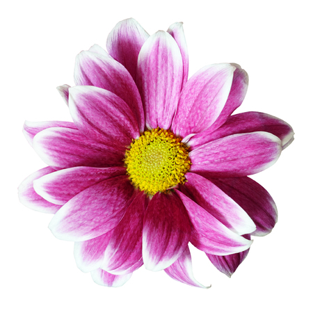 detai: Pink aster flower isolated on white Stock Photo