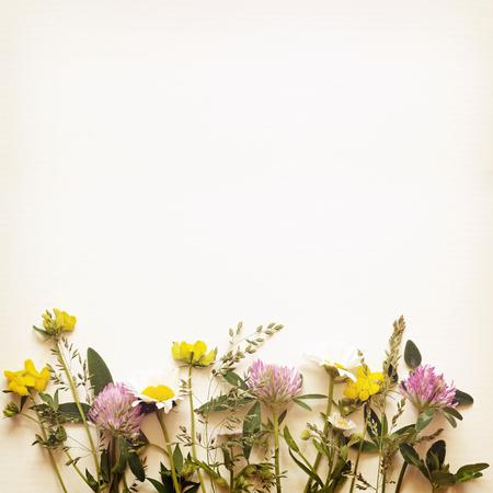 the edge: Summer flowers edge on light background