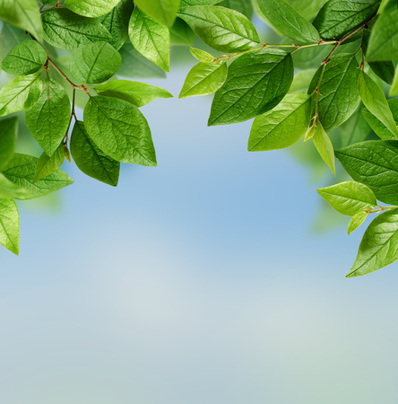 blue green background: Green leaves on blue background Stock Photo