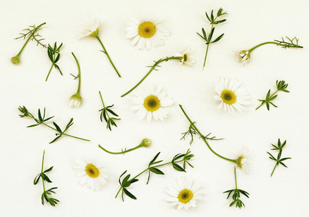 White background with daisy flowers and grass. Flat lay.