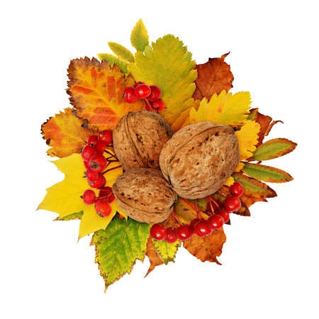 Autumn composition with walnuts, berries, dried leaves in yellow, orange and green colors isolated on white