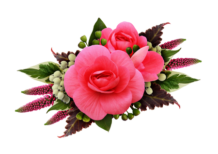 Pink begonia flowers arrangement isolated on white